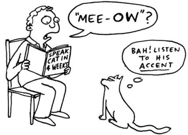 cat-accent